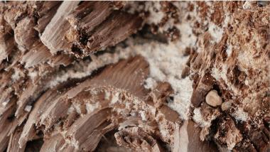 termite prevention and treatment